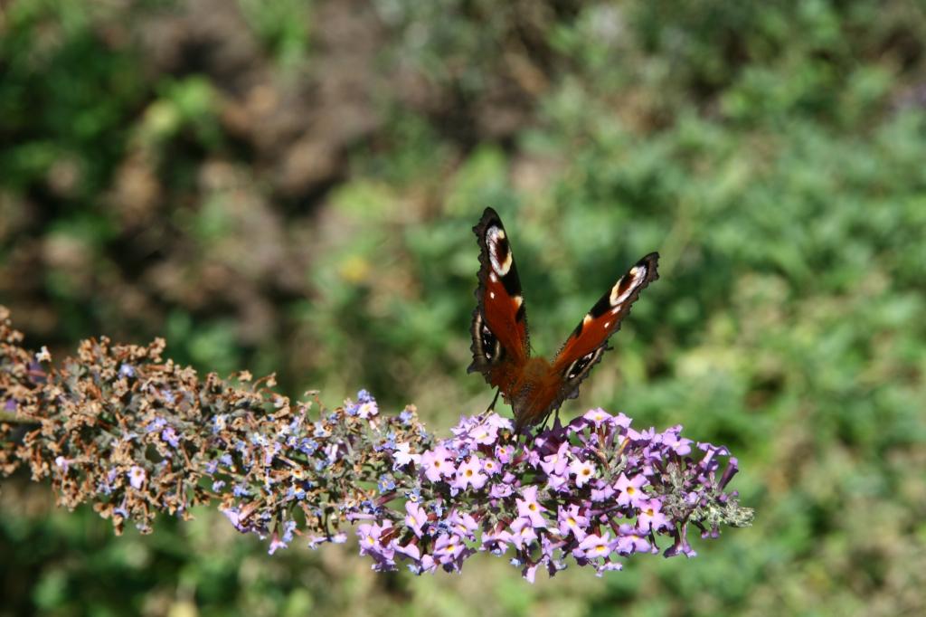 27jul2010_0252